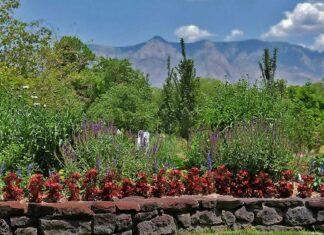 Garden in Corrales