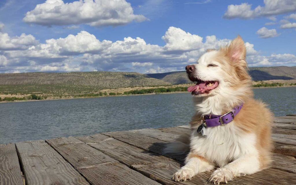 Canine smiles at Cochiti Lake